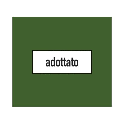 ulivo-secolare-adottato